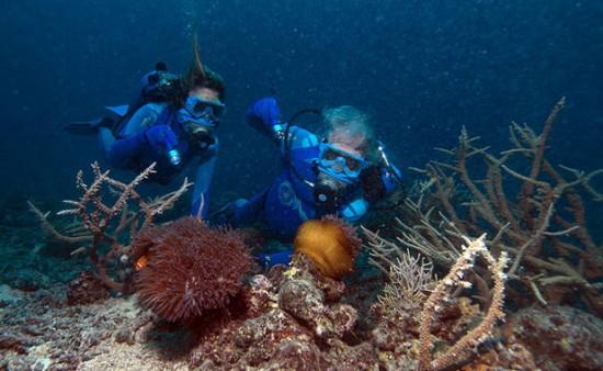 olly&cousteau